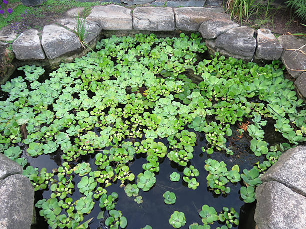National Cathedral Watercress Garden - foto de acervo