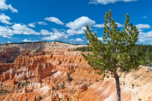 magnificent landscape of Bryce Canyon, National Park, Utah, USA