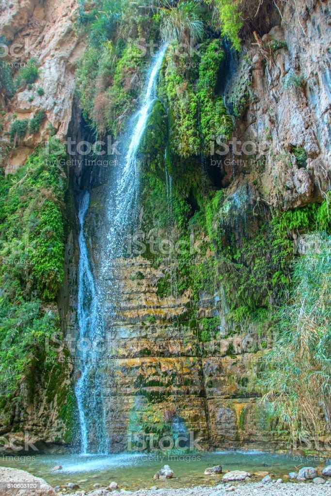 National Park Ein Gedi stock photo