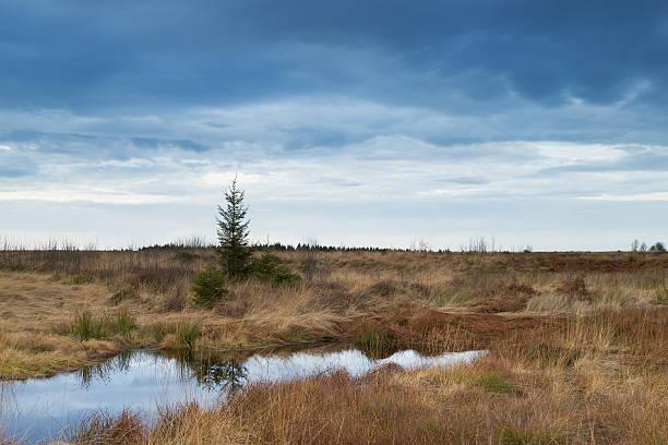 national park hautes fagnes during fall in belgium. - hohes venn stock-fotos und bilder