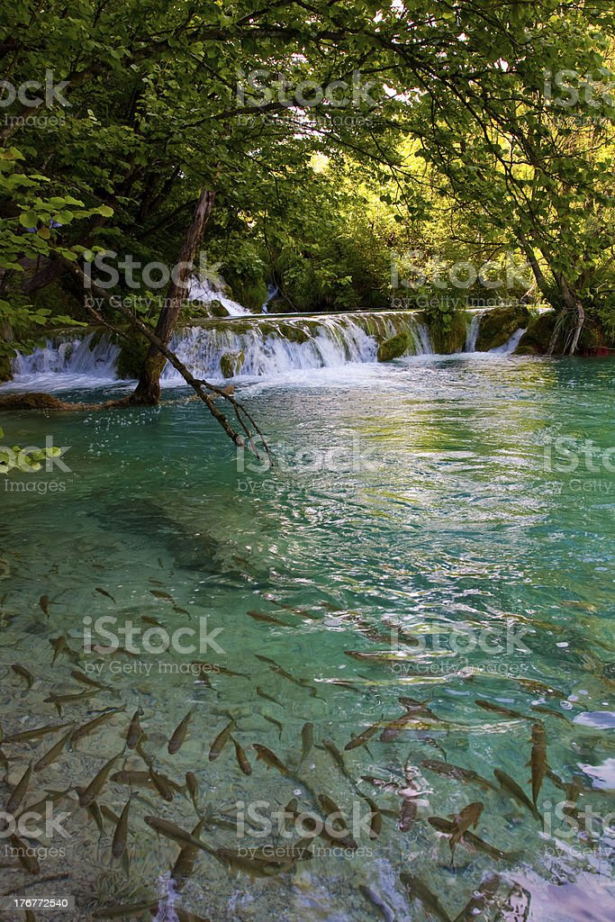 National Park Plitvice royalty-free stock photo