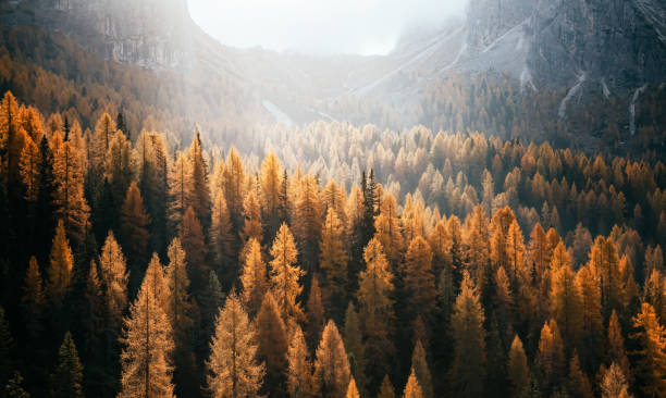 national park tre cime di lavaredo, dolomiti alps, south tyrol, auronzo, italy, europe. - trees in mist stock pictures, royalty-free photos & images