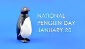 Penguin toy stock images. Penguin toy on a blue background. Penguin Day Poster, January 20. Important day