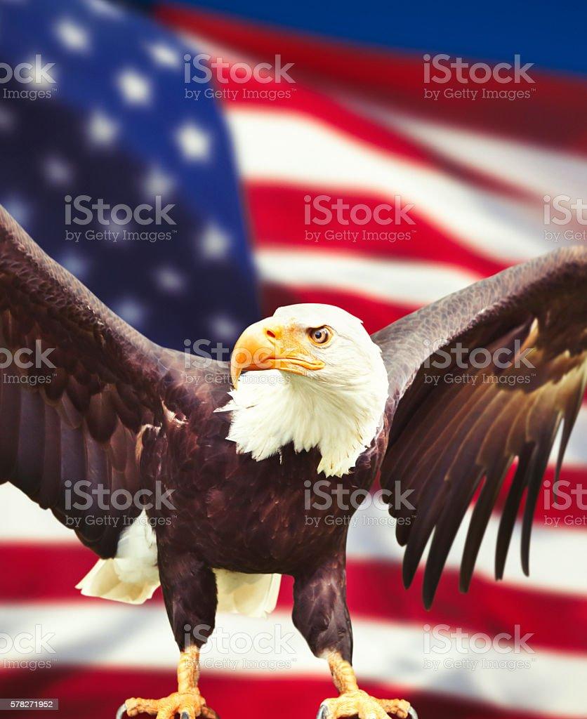 National symbols of the USA stock photo