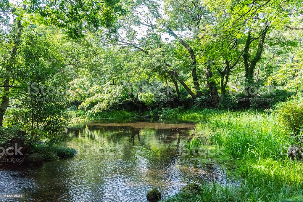 Nationally designated natural monument area in Rakujuen Park,Mishima Japan stock photo