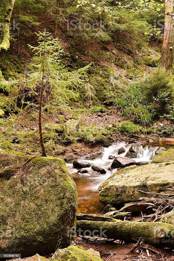 Nationalpark Harz stock photo