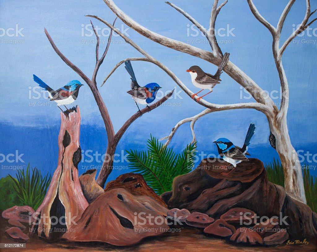 Native Australian Fairy Wren birds stock photo