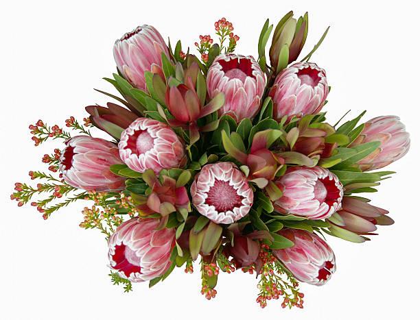 Native australian flower bouquet picture id535432425?b=1&k=6&m=535432425&s=612x612&w=0&h=1k67dvksti6rxj1ju z2j525saaf5pduaz51qfeneug=