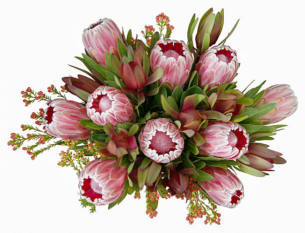 Native Australian Flower Bouquet stock photo