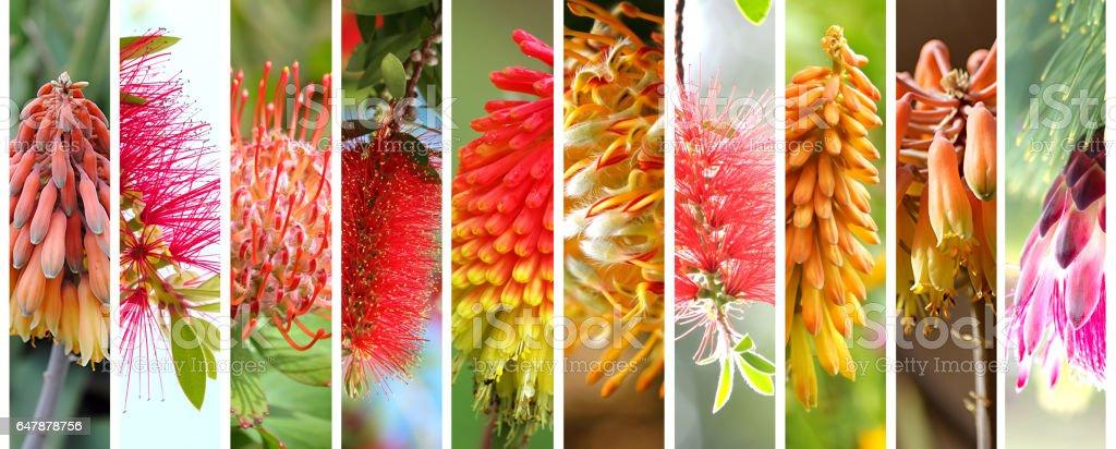 Native Australian plants set stock photo