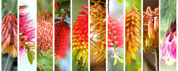 Native Australian plants set stock photo