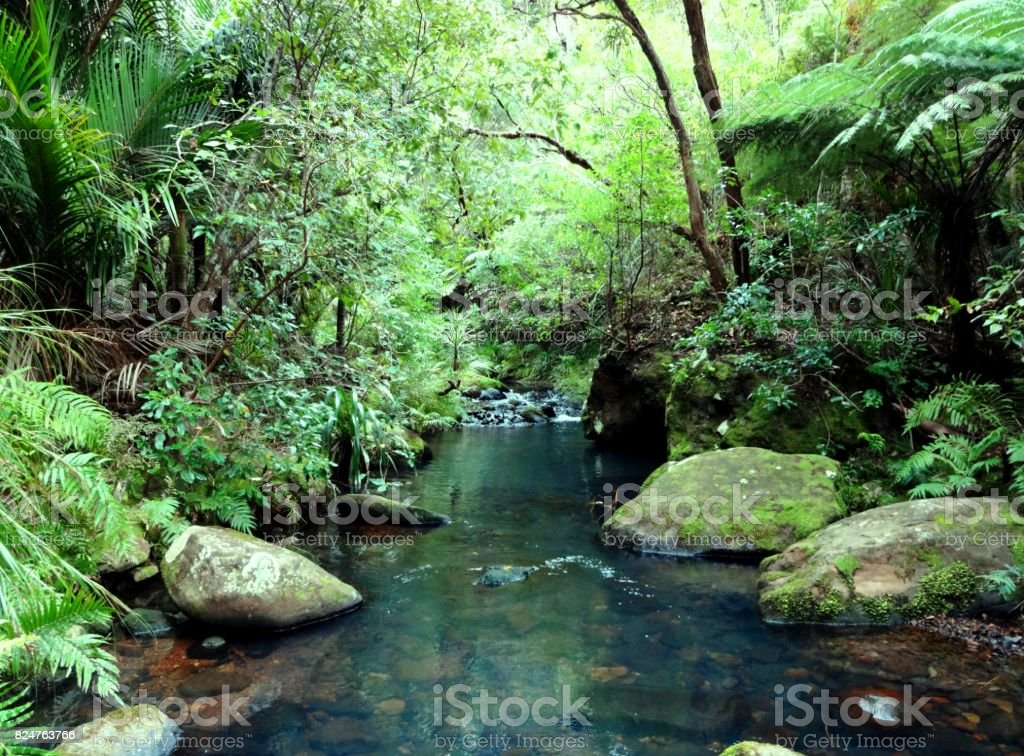 Native Bush and Creek in New Zealand stock photo
