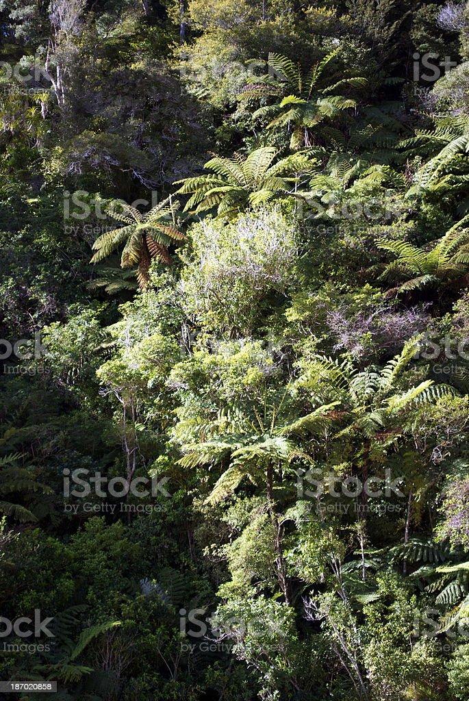 Native Bush Background, New Zealand stock photo