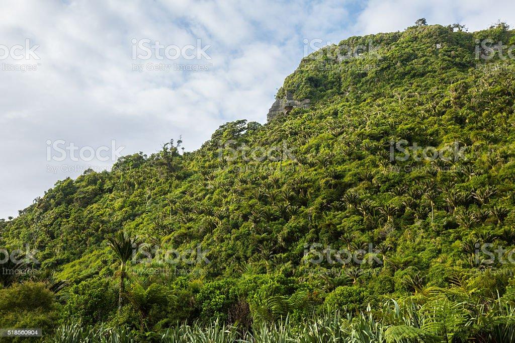 Native Bush of West Coast, New Zealand stock photo