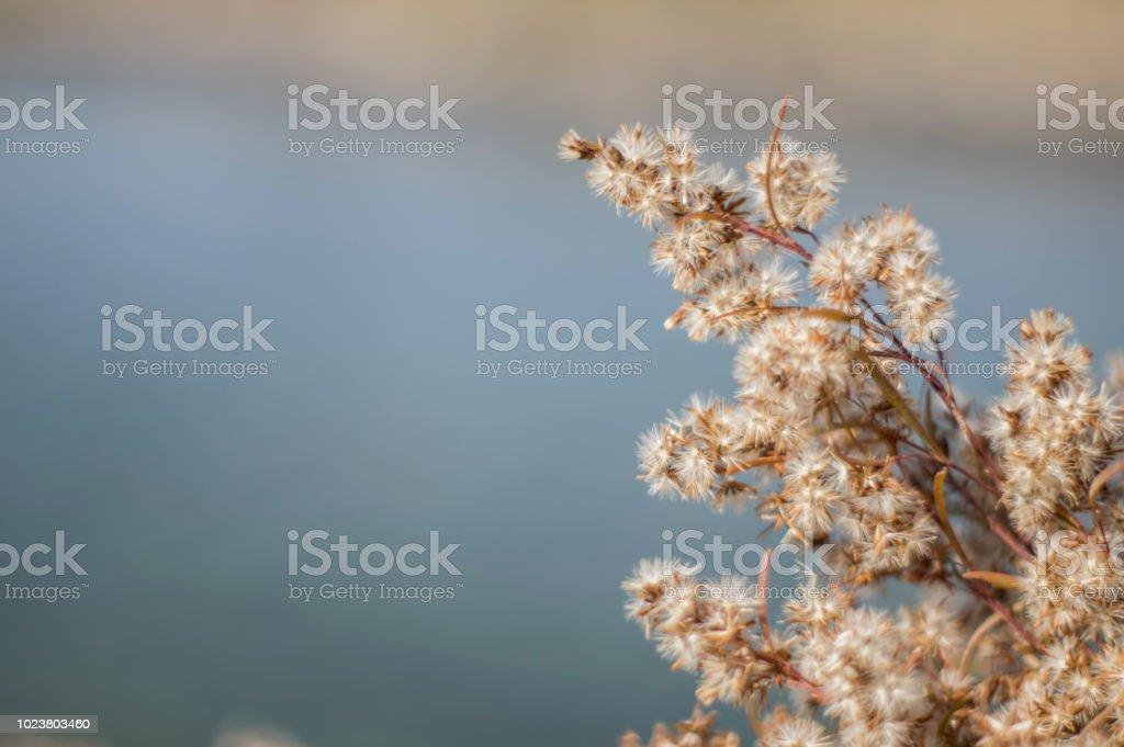 Flora autoctona - foto de stock