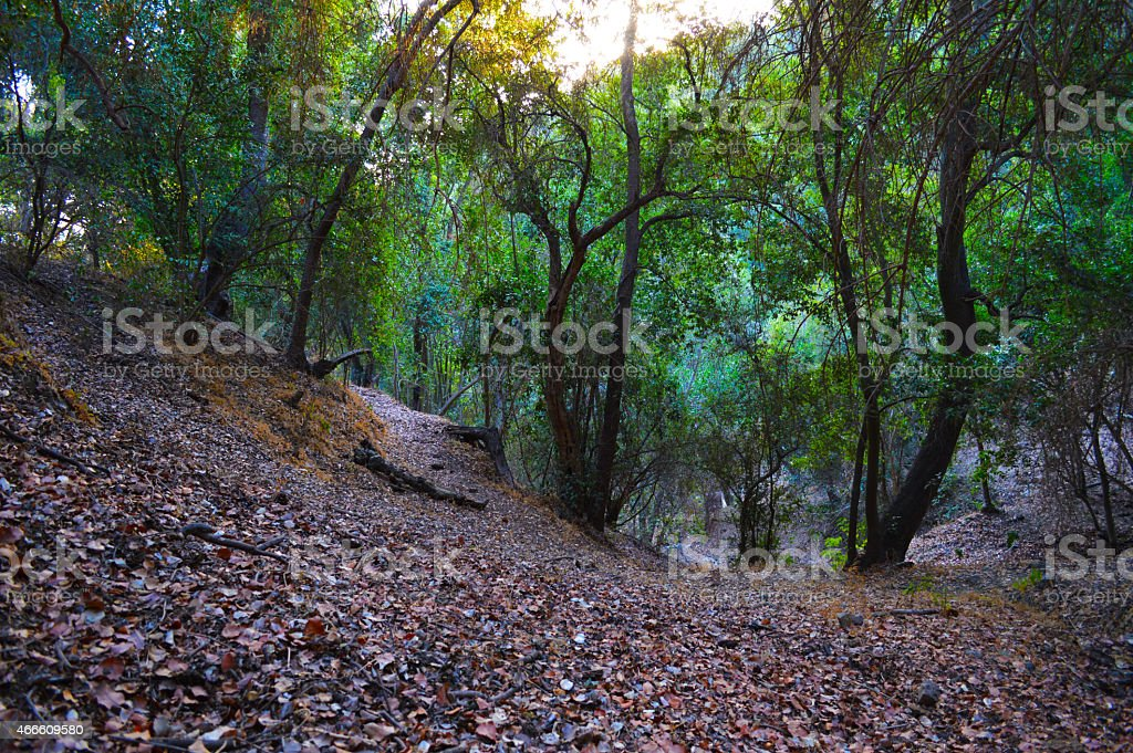 Native forest in central Chile royalty-free stock photo