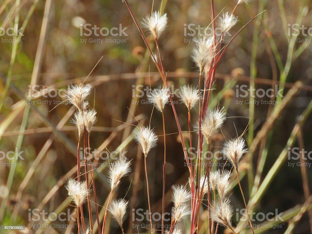 Native Grass, Oklahoma stock photo