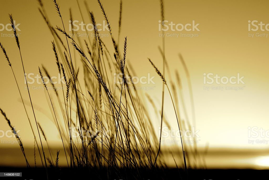 Native grass prairies and sunset over the hills with backlit stock photo