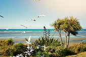 The Iconic Native New Zealand/ Aotearoa Cabbage Tree (Ti Kouka), otherwise known as Cordyline Australis, in New Zealand Landscape. Taken at Pohara Beach near Takaka, Golden Bay, Tasman District in New Zealand's South Island.