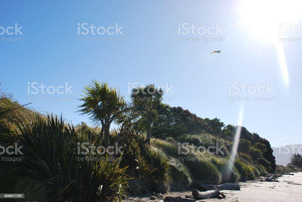 Native New Zealand Cabbage Tree stock photo