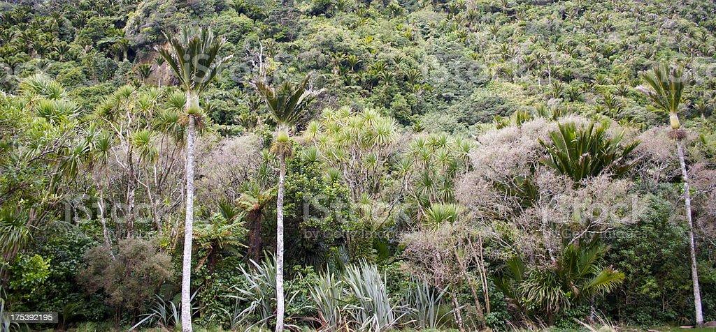 Native Nikau & Bush Background, New Zealand stock photo