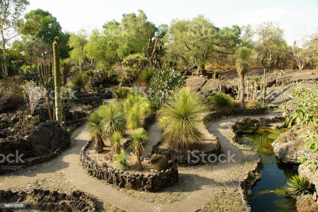 Native plants in Mexico stock photo