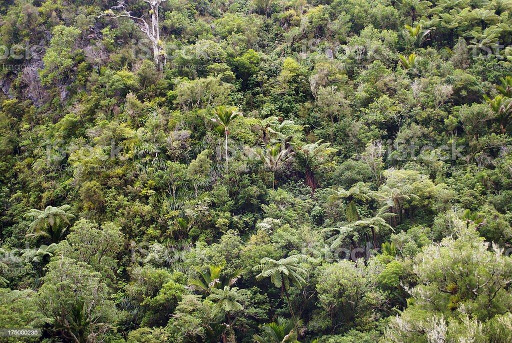 Native Punga, Nikau & Bush Background, NZ stock photo