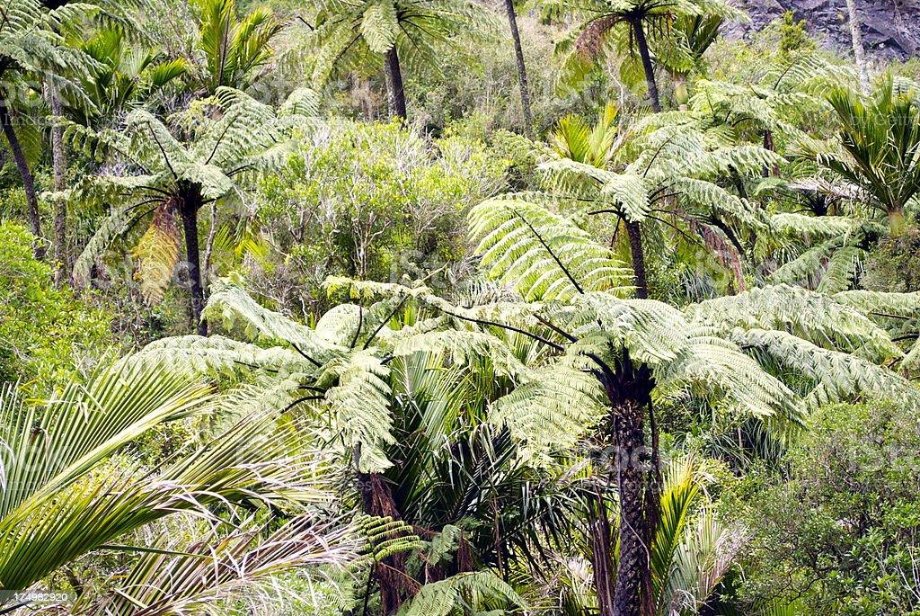 Native Punga Tree & Nikau Bush Background, NZ stock photo