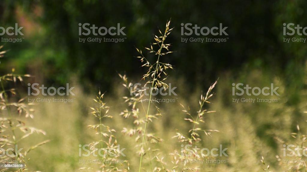 Natur, 바이에른 - 로열티 프리 0명 스톡 사진