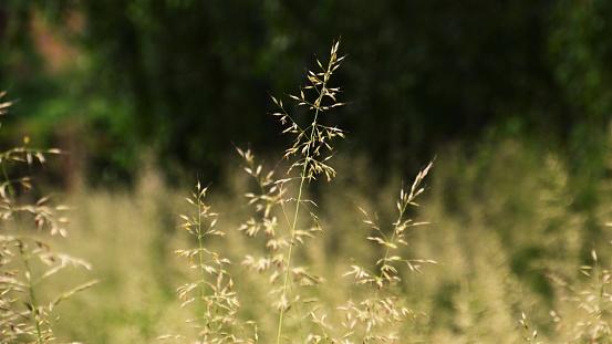 Natur 바이에른 0명에 대한 스톡 사진 및 기타 이미지