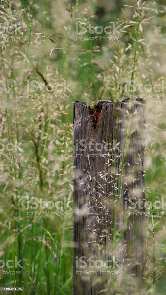 Natur, Bayern - Photo de Allemagne libre de droits