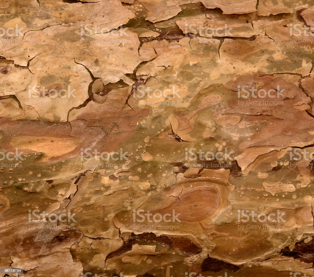 natural abstract bark royalty-free stock photo