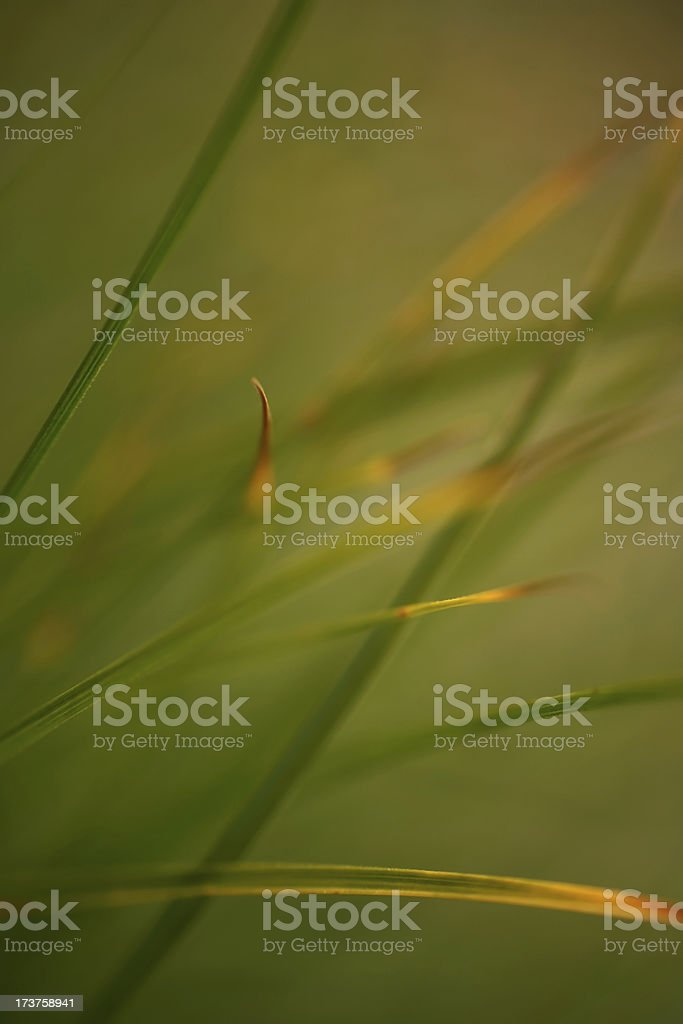 Natural Abstraction stock photo