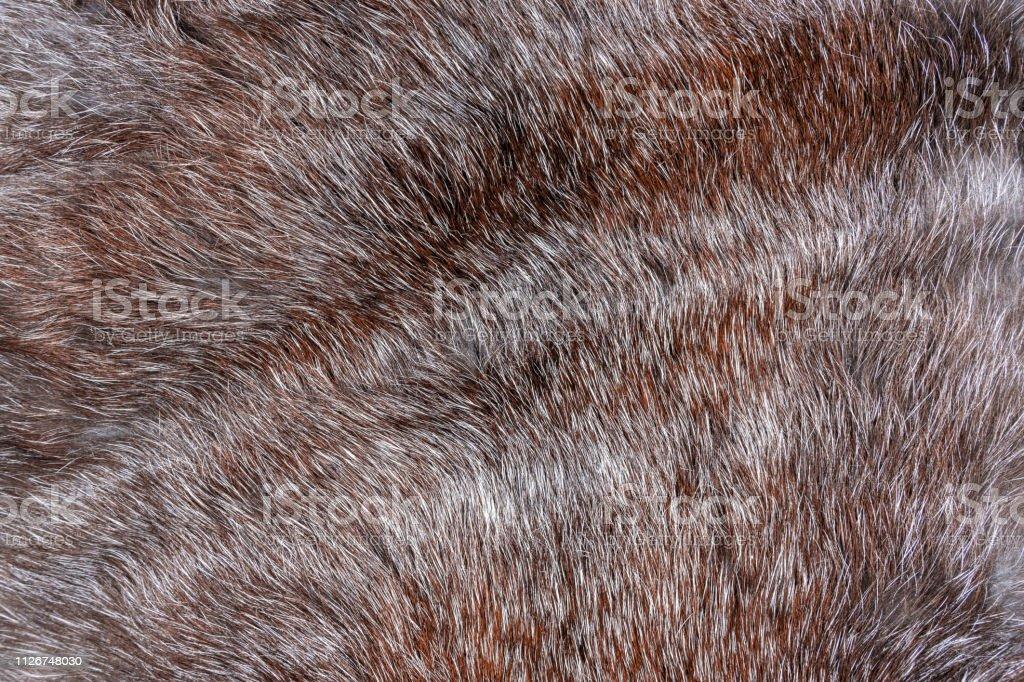natural animal brown long hair fur background.