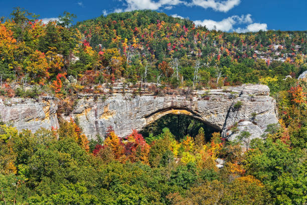Natural Arch In Kentucky Natural Arch Scenic Area At Parkers Lake Kentucky In The Daniel Boone National Forest national forest stock pictures, royalty-free photos & images