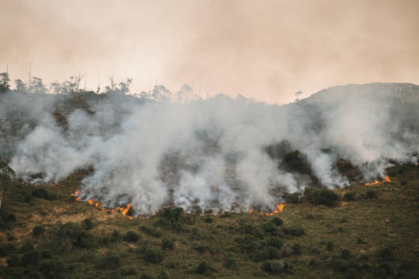 Natural area on fire stock photo