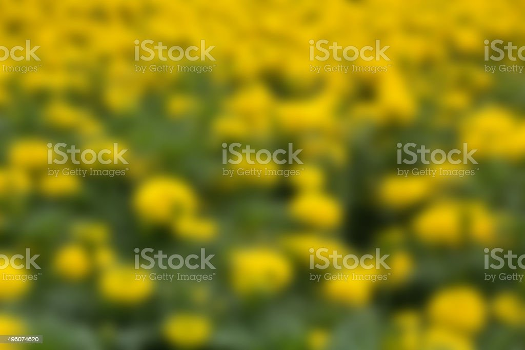 Natural background - blurry flower in a summer garden. stock photo