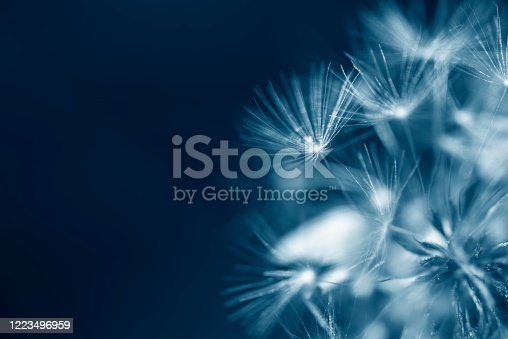 istock Natural background, close up of dandelion, abstract background 1223496959