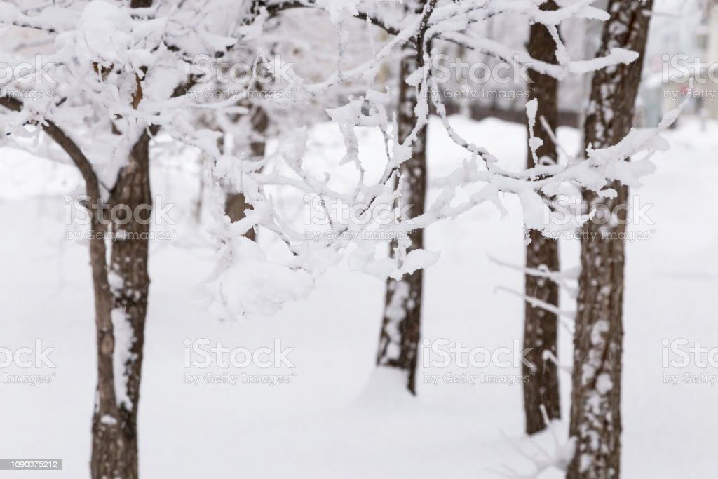 Natural background, landscape. Cold winter frosty day. Snow weather,...