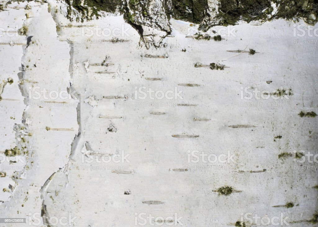 Natural background of birch bark royalty-free stock photo