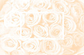 Natural background of fresh amazing white and purple roses for wallpaper, postcard, cover, banner. Wedding decoration. Beautiful bouquet of roses as gift for Mother's Day, Valentine's Day, Birthday