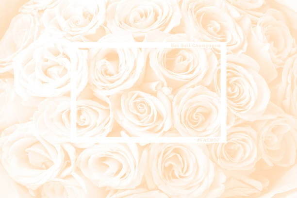 Natural background of fresh amazing white and purple roses for picture id1287330661?b=1&k=6&m=1287330661&s=612x612&w=0&h=evum4akz5c1anjtlzviu6ws800grnavw7leactu5hi8=