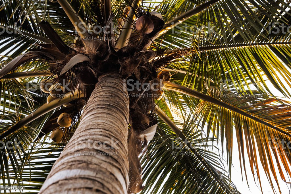 Natural background of palm tree, summer vacation concept stock photo
