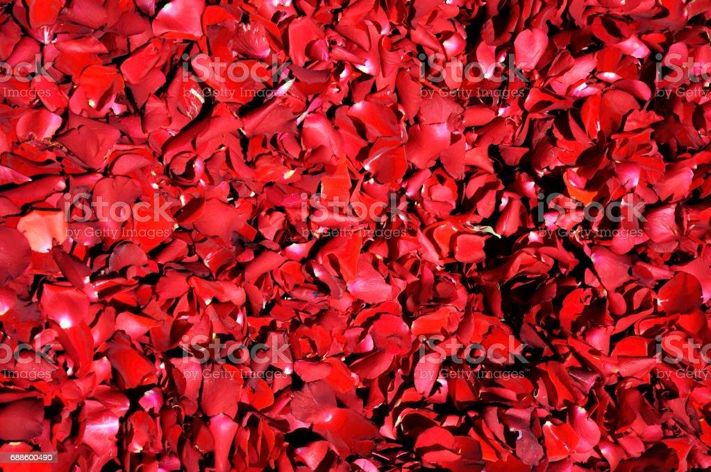 Natural de fondo de pétalos de rosa rojos, aterciopeladas, orgánicas - foto de stock