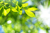 Bright spring natural background from the fresh leaves