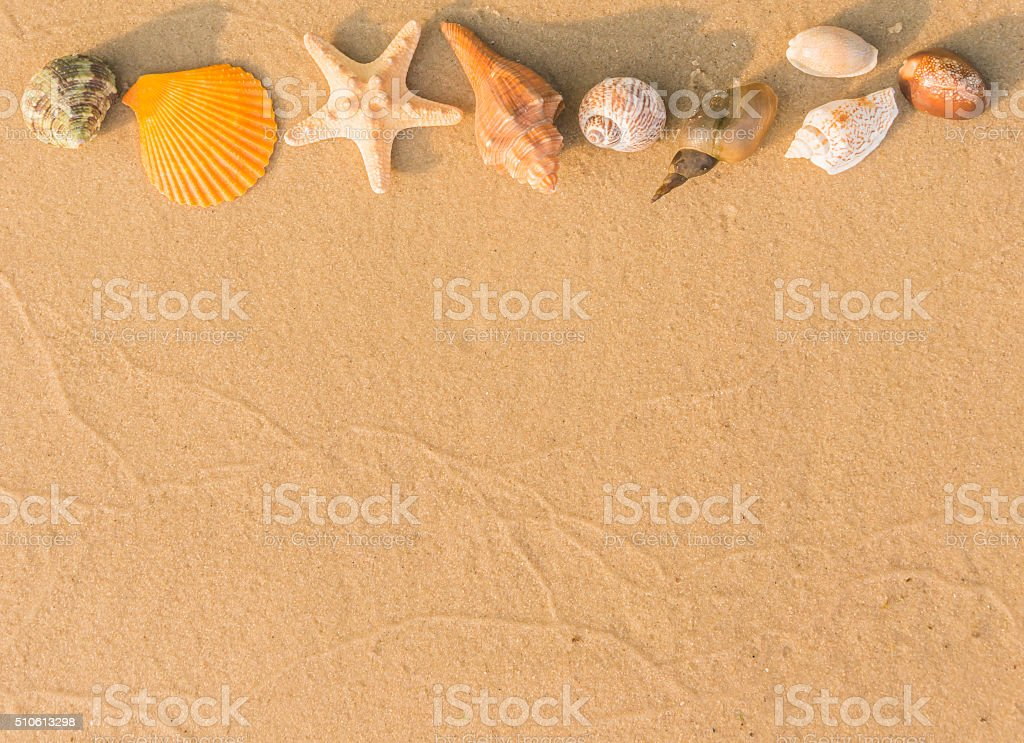 Natural background. The beach and seashells stock photo