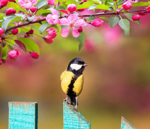 Natural background with a beautiful tit bird sitting on a wooden in picture id1143328259?b=1&k=6&m=1143328259&s=612x612&w=0&h=jrz66gd fy8hd0vzn5cofu0hynixd2qfzqf2x8rmlqa=