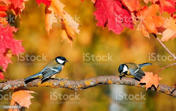 Natural background with a pair of cute bird tits sitting in an autumn picture id1055645314?b=1&k=6&m=1055645314&s=612x612&h=qhwnzpgqktjrvzhqqo8wuz5ydwmr5wwu lw ankajoi=