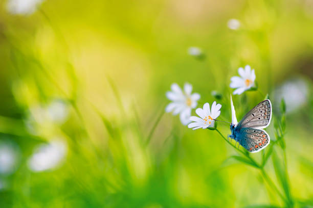 Natural background with delicate white flowers on a green summer and picture id1098429200?b=1&k=6&m=1098429200&s=612x612&w=0&h=xi 8uz7w5nc0ooc5onuaaorarihz zjpb4viko9kdeg=