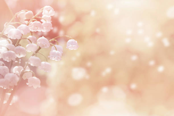 Natural background with lilies in pink tones. stock photo